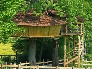 cabane-arbre-bourgogne-7