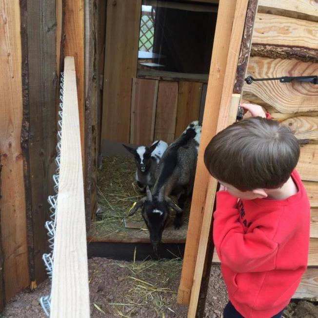 Faire sortir les chèvres